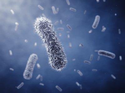 Bilde av en immuncelle