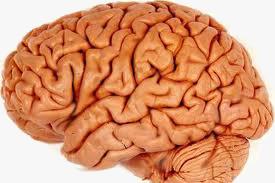 Ketogen diett ved hjernekreft